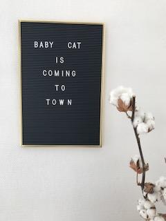 Crédit photos : comingto.town. Letter board noir et doré et branche de fleurs de coton