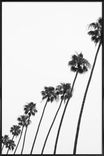 Cali palms de Clint