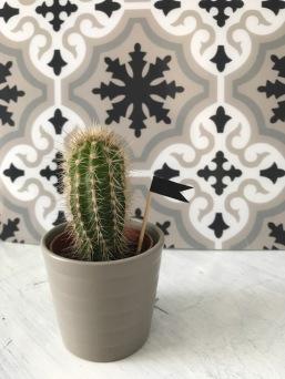 Cactus et carreaux ciment