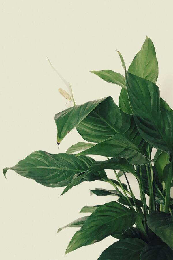 Ma jolie plante dépolluante