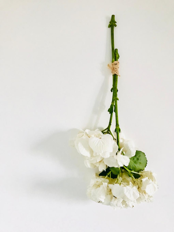 Fleurs d'hortensias séchées